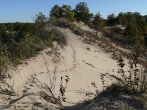 Miller BEach Dunes 038